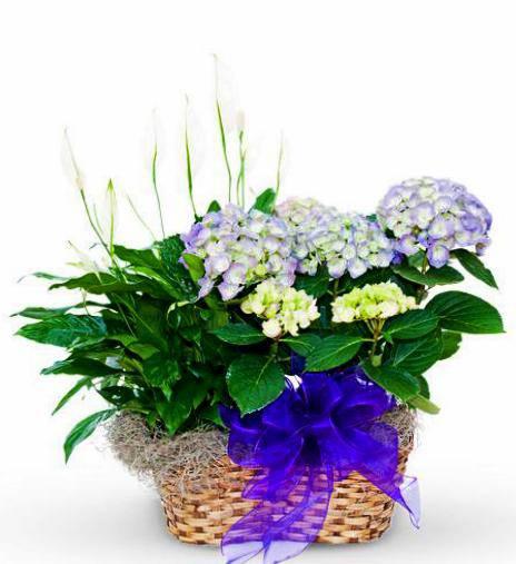 Basket Of Assorted Plants - Premium