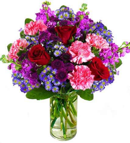 Enchanting Rose Splendor