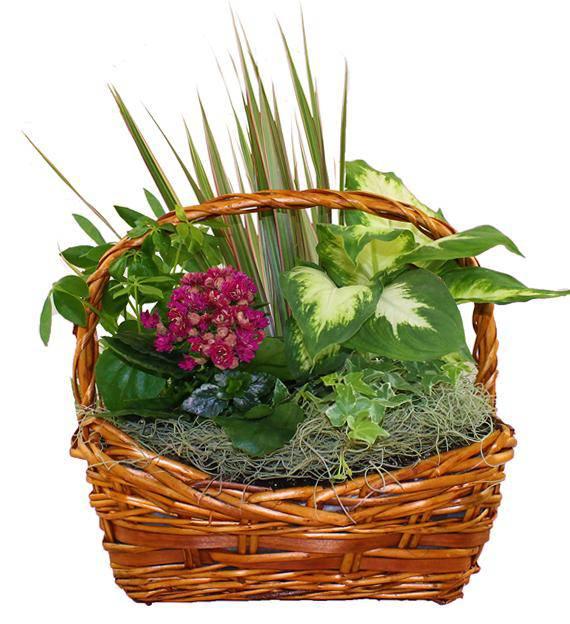 European Dish Garden Avas Flowers