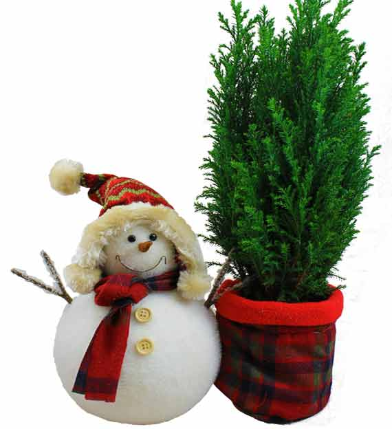 Evergreen & Snowman Gift Set - Farm Fresh