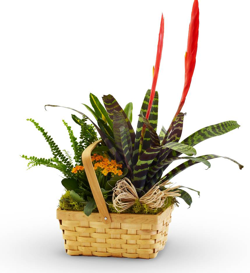 Florist Designed Green Plants in a Basket
