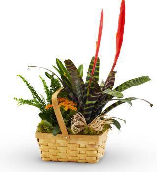 Florist Designed Green Plants in a Basket