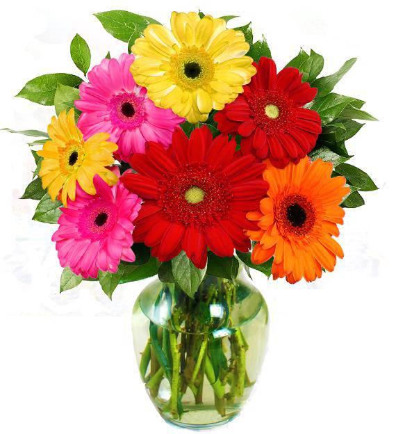 Gerbera Daisy Bouquet Gerber Daisy Bouquet