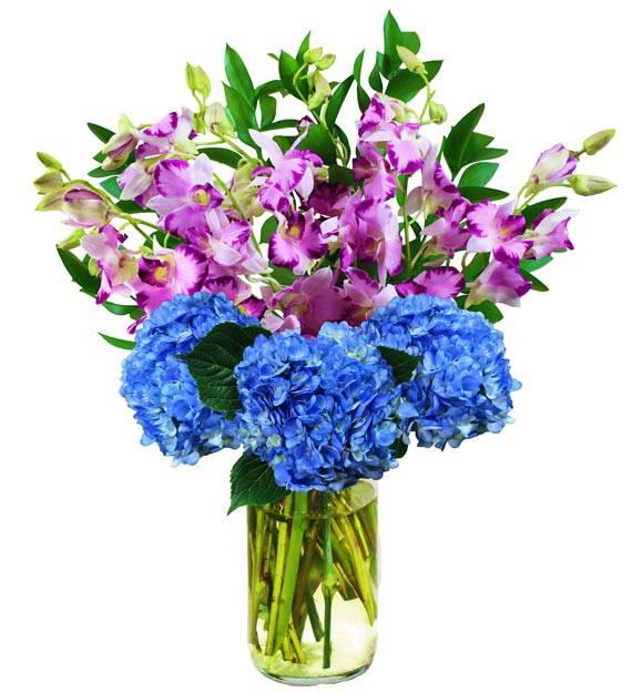 Hydrangea & Orchids - Farm Fresh