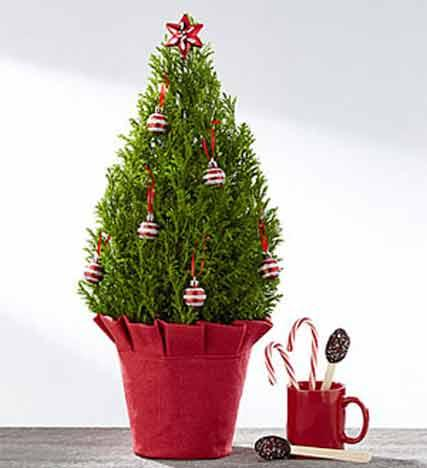 Joys of Christmas Boxwood Tree