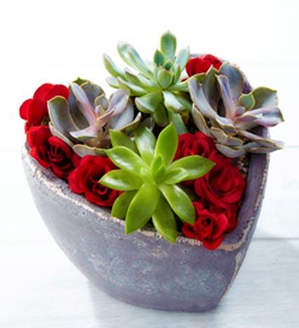 Love Wins Valentine's Day Succulent Garden