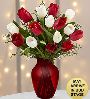 Merry Moments Holiday Tulip Bouquet- 15 Stems