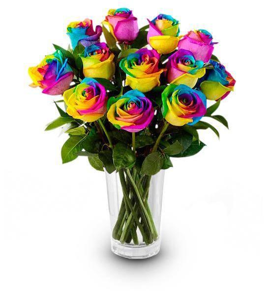 Rainbow roses farm fresh avas flowers for What are rainbow roses