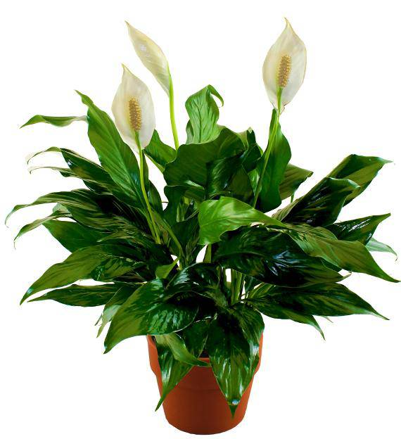 Customer service, Lack of customer service, Poor quality in every way, Missed delivery date, Delivery Summary Avas Flowers is a firm which sells and delivers flowers/5(K).