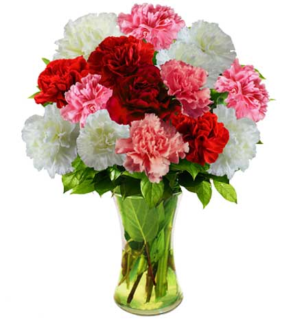 Pink, Red and White Carnations - Farm Fresh