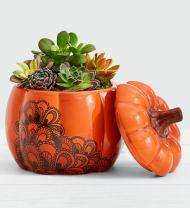 Pumpkin Spice Succulent