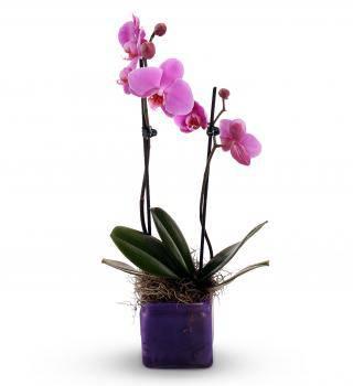 Purple Orchid Planter