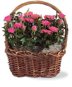 Rose Garden Basket