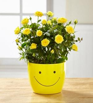 """Sending a Smile 6"""" Mini Rose Plant"""