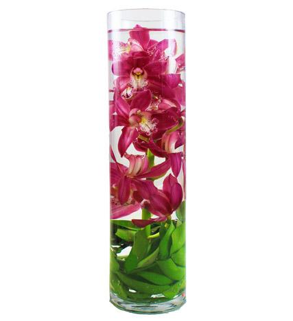Sensational Orchid - Farm Fresh