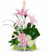 Stylish Lily Oasis