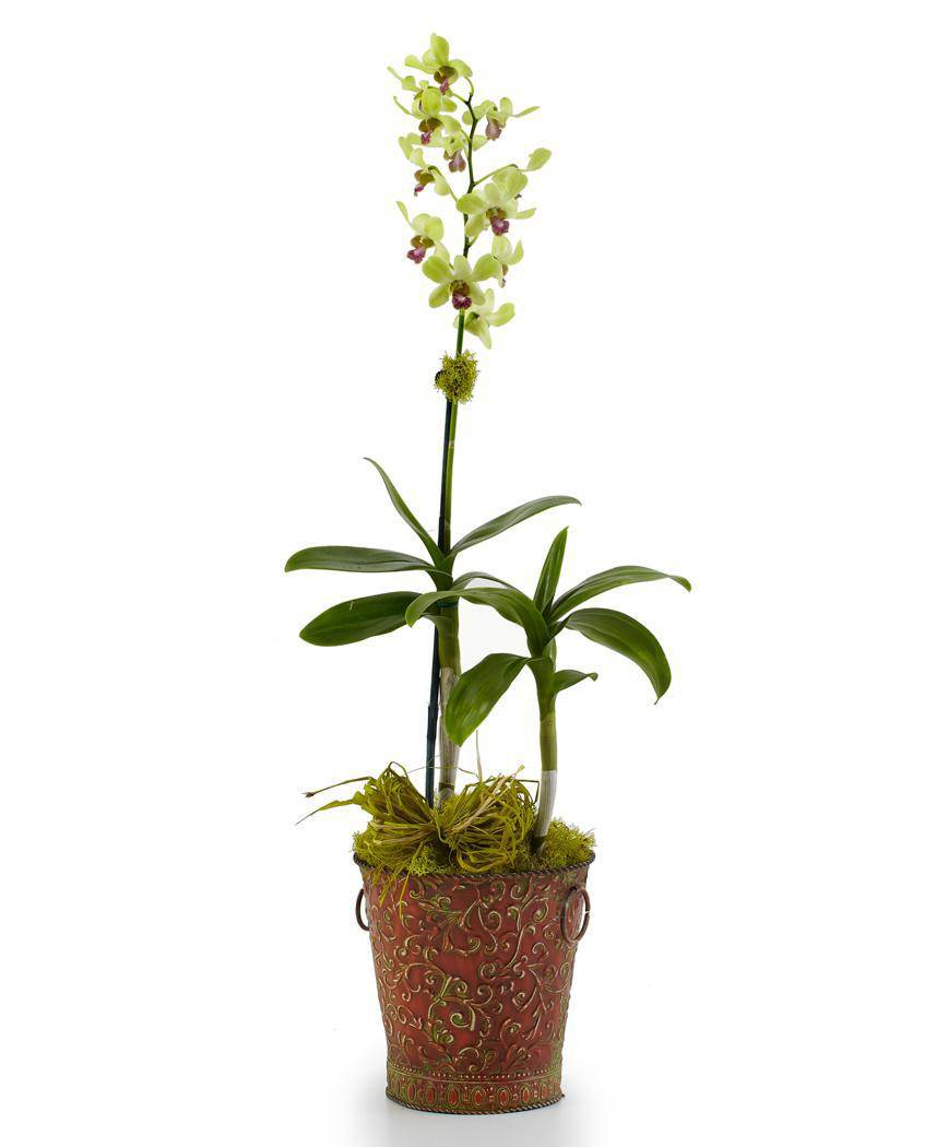 Sympathy Orchid Planter