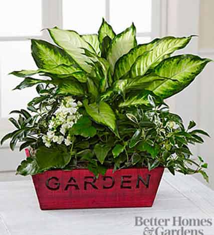 Christmas to Remember Holiday Dish Garden by Better Homes and Gardens™