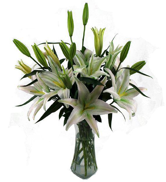Avasflowers White Lily Sympathy Bouquet