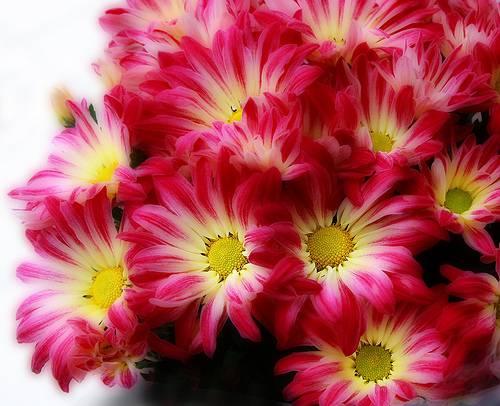 Posts In Birthday Flowers Avas Flowers