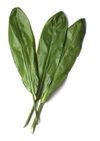 Ti Leaf (Cordyline Fruticosa)