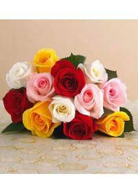 Rose (Rosaceae)