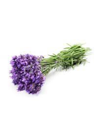 Lavender (Lavandula Spica)